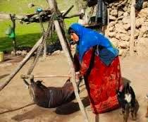 آیین مشک زنی
